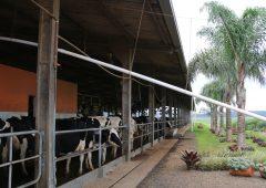 How a pig farmer made a splash into milk with Brazil's first VMS robots