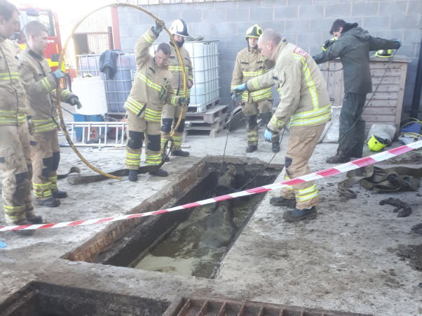 Dairy cows rescued from slurry pit in Wales