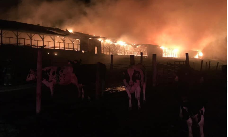 Over 550 cattle perish in US barn blaze