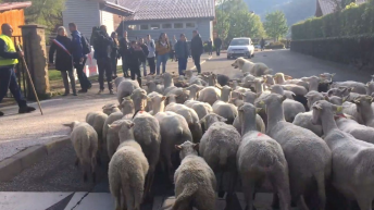 French school enrolls sheep in final effort to 'boost numbers'
