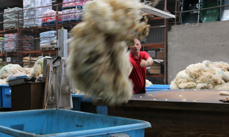 Ulster Wool invites wool producers and shearers to depot open day