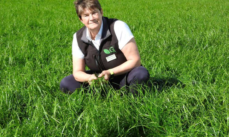 Better Grazing meetings to put multi-species swards in the spotlight