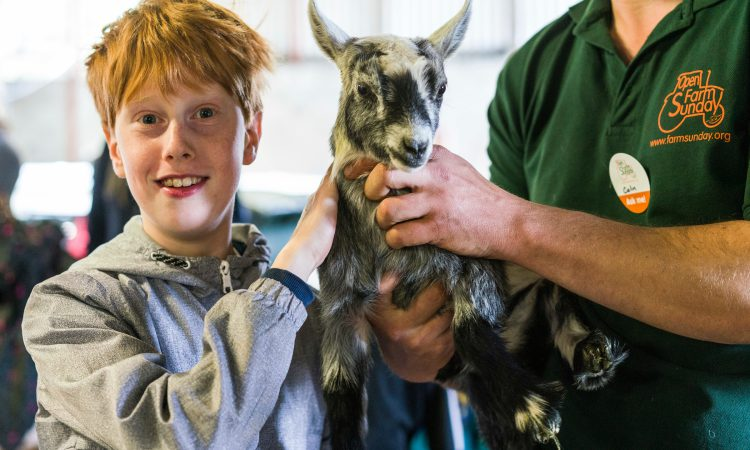230,000 visitors take to farms for 2019 Open Farm Sunday
