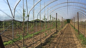 New centre to increase the sustainability and productivity of tree fruit