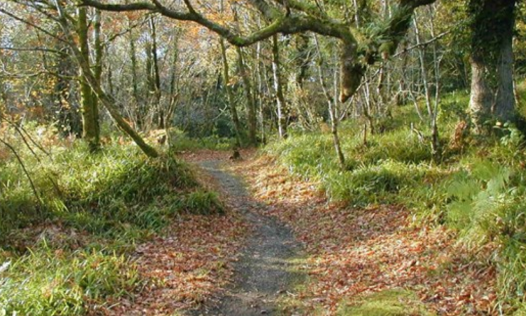 NI environment authority works with landowner to re-develop country park