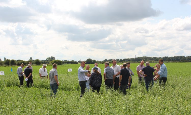 Carrot growers review trials of linuron alternatives