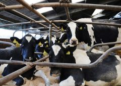 New £8 million Dairy Innovation Centre planned at SRUC