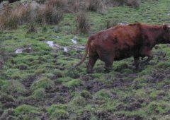 West Yorkshire farmer sentenced for animal welfare offences