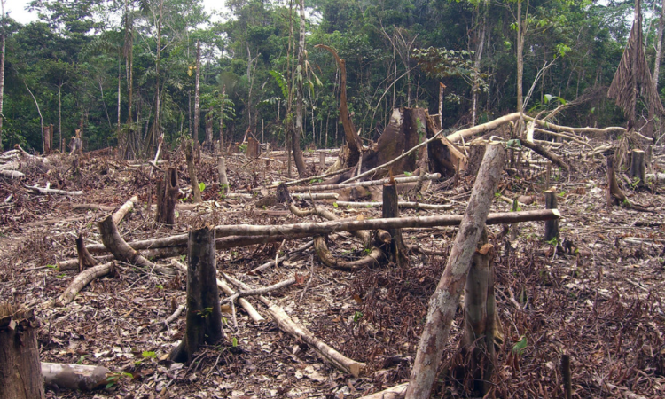 Deforestation in Brazil soars dramatically in first half of July