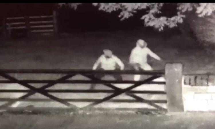 Video: Culprits caught on camera trying to butcher sheep