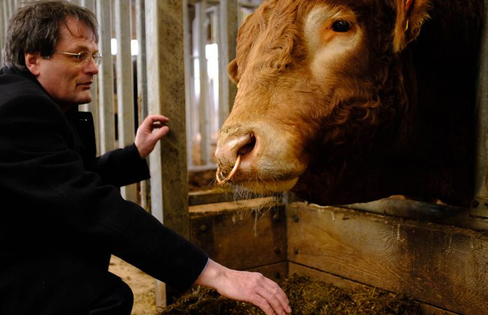 Cow gut DNA study finds bugs that could up meat and milk yields