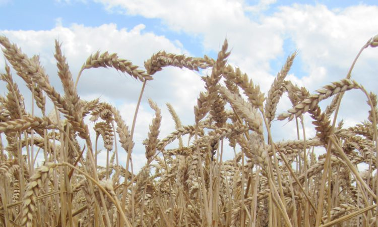 Bushels and tonnes…do you know how to convert?