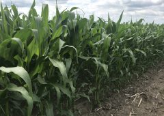 Grain price: WASDE report doesn't help prices