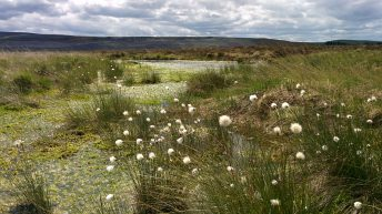 Cash incentive for landowners to restore UK peatland
