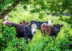 New Environmental Farming Scheme opens in Northern Ireland