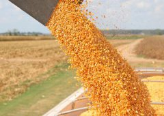 Road trip in US might affect your grain price