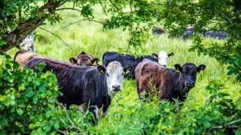 Farmers urged to 'step up' and demonstrate industry's role tackling climate change