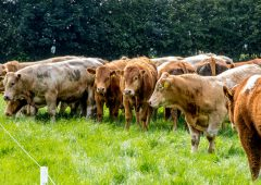 QMS launches new Sustainable Red Meat Action Groups
