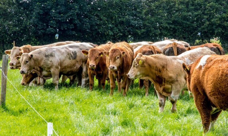 Quality Meat Scotland responds to coronavirus threat
