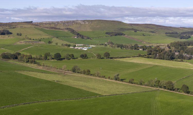 Savills farmland forecast 2020 – local factors to dominate