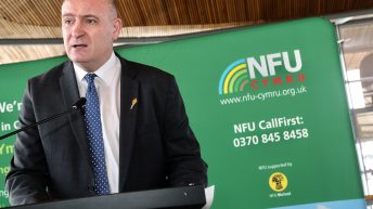 White Paper will not allow Welsh farming to 'thrive in a post-Brexit marketplace'