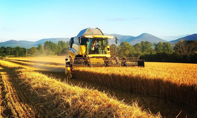 Winners of harvest photo competition announced