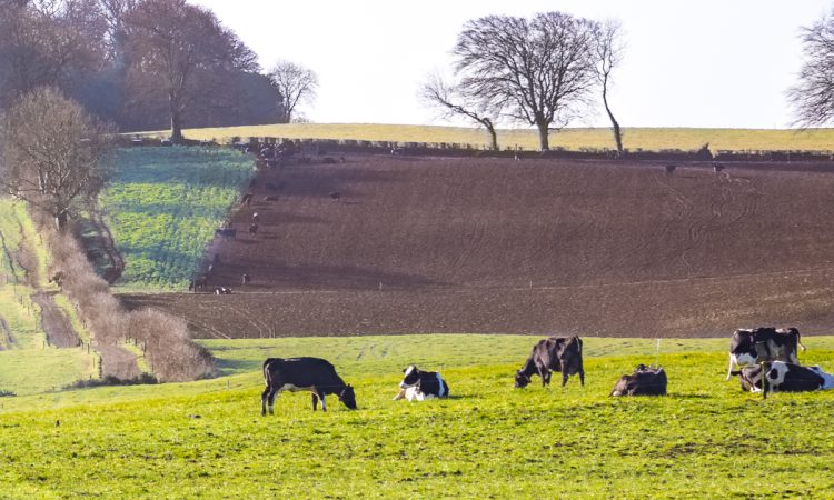'Farmers in NI cannot produce food to a different set of rules to farmers in the south'