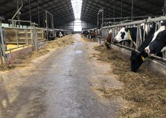 Dairy focus: A glimpse of how the other half lives in the Netherlands