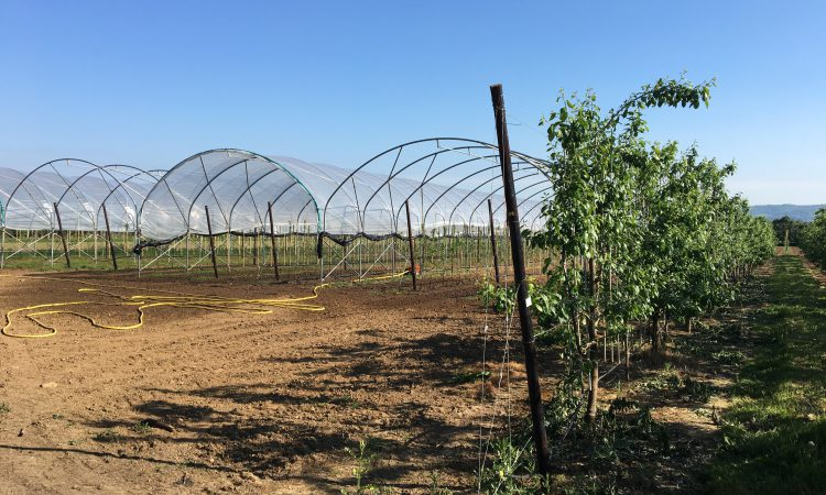 Mechanical weeder to be revealed to growers at new plum centre open day