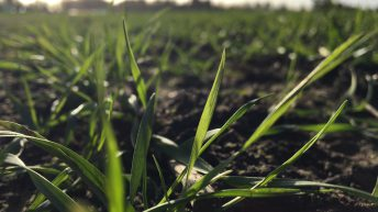 New arable technology could unlock British farmland's full potential
