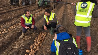 Potatoes Next Generation: Applications open at BP2019
