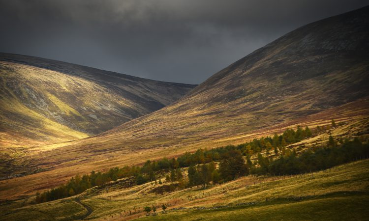 New 'landscape leadership' programme to help shape Scotland's rural environments