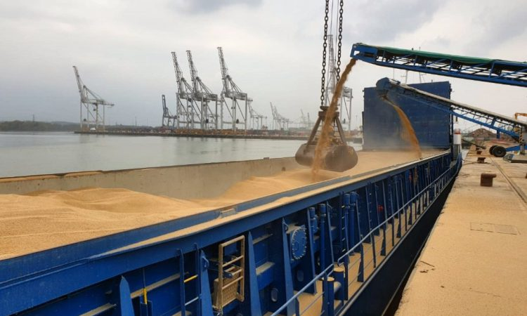 Grain price: UK exports moving at record pace