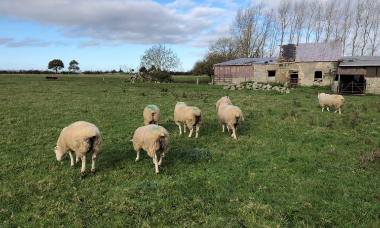 Options for finishing store lambs