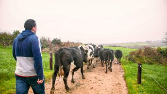 Treasury announces £3 billion of farm support in time for 2020
