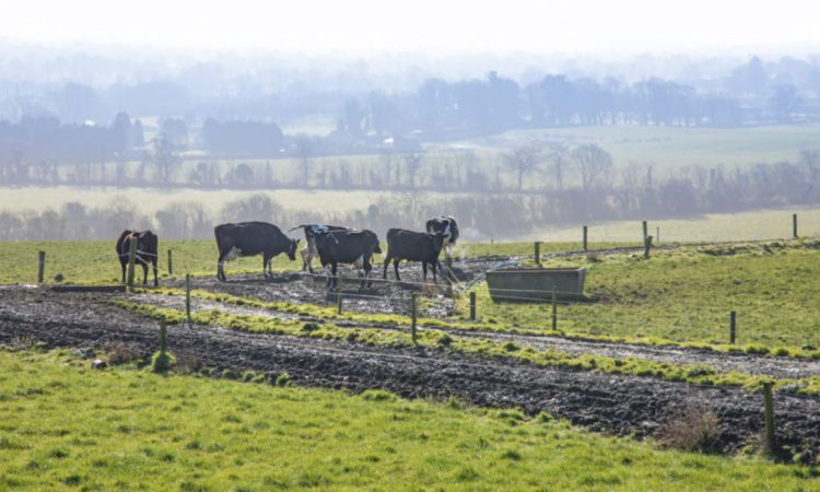 Farmers urged to monitor outwintered livestock