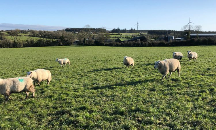 What are my options when it comes to empty ewes?
