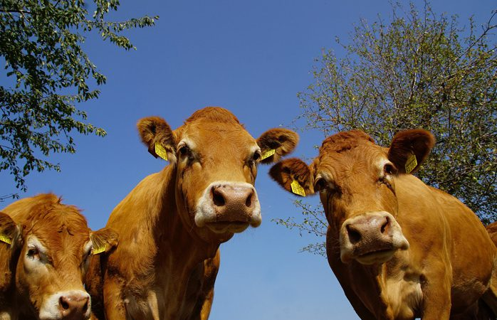 UK study to develop and adapt technology to monitor methane production in outdoor cattle