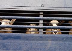 Devon farmer avoids jail after breaching animal ban
