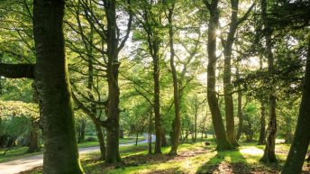 National Trust to plant 20 million trees over 10 years