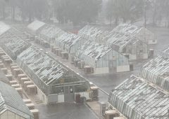 Huge hailstones batter Aussie agri research glasshouses
