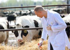 UK establishes group to tackle ruminant endemic diseases