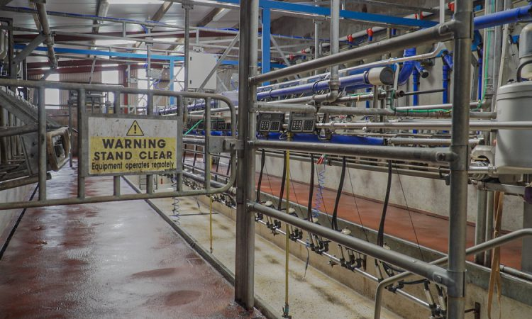Will OAD milking in early lactation affect my herd's milk production performance?