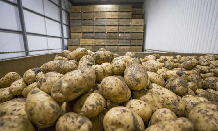 UK potato businesses urged to ditch CIPC ahead of use-up date