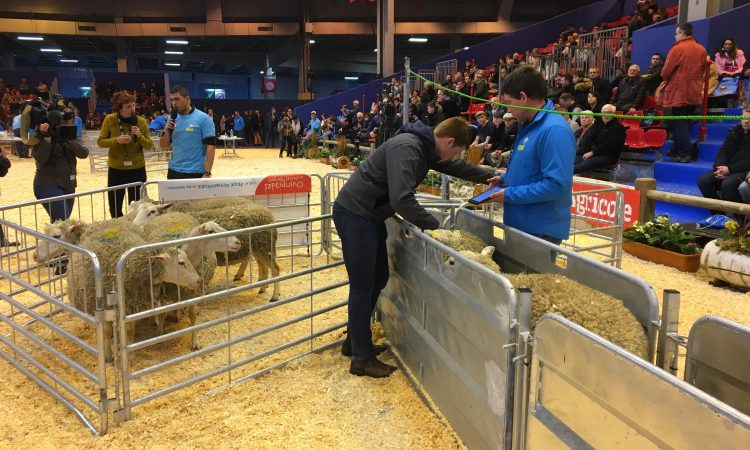 UK young shepherds head to European finals