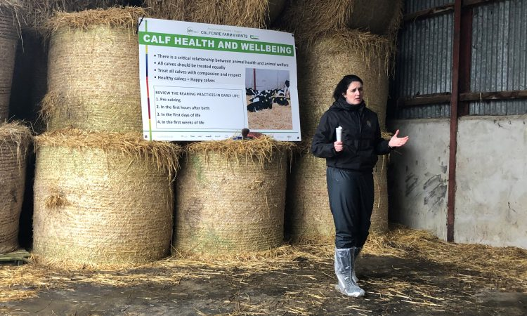 'Calf health is a good measure of calf welfare' on farms