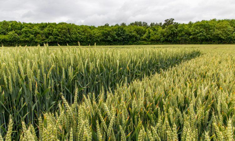 Understanding the 'Revylution' in fungicides