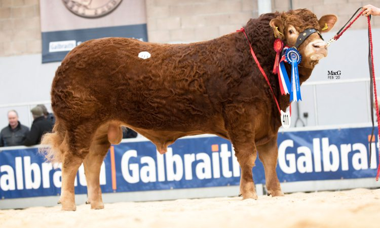 Dyke bull tops solid Stirling Limousin trade at 13,500gns