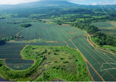 Irish fruit firm purchases 900ha farm in Costa Rica