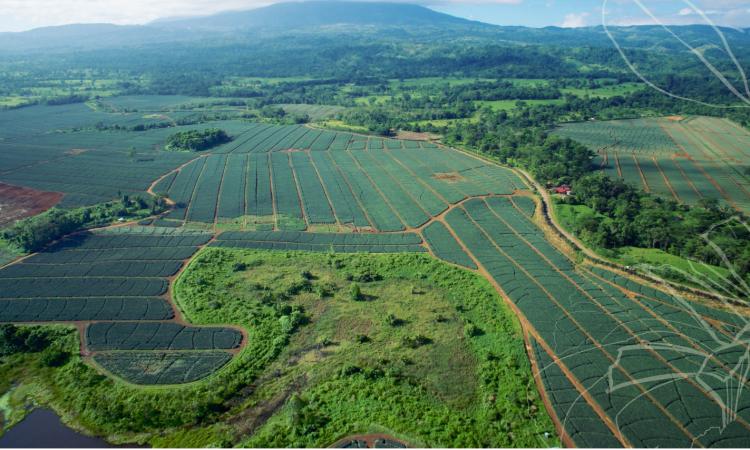 Irish fruit firm purchases 900ha farm in Costa Rica